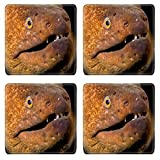 Liili Natural Rubber Square Coasters IMAGE ID: 1943461 A moray eel peeks out of a dark crevice in the cool waters of California
