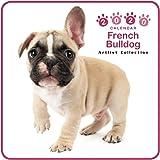 カレンダー 2020 ミニサイズ 壁掛け フレンチ・ブルドッグ (ミニ) 403350 ノーマルレンズシリーズ 2019年9月-2020年12月 アーリスト イヌ いぬ French Bulldog
