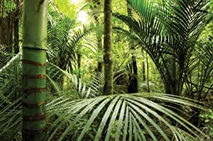 """12-Feet wide by 8-Feet high. Prepasted wallpaper full wall size mural from a photo of: Rainforest. Easy to hang remove and resuse (hang again) If U do as in our video. 144"""" W by 96"""" H"""