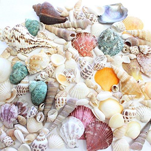 Fantastic Set of 90 Assorted Natural Sea Shells Beach Ocean