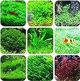 Hot Sale! 1000 Pcs Aquarium Grass Seeds (Mix) Water Aquatic Plant Seeds Decoration Ornament Plantas Raras Cheap Aquarium Fish