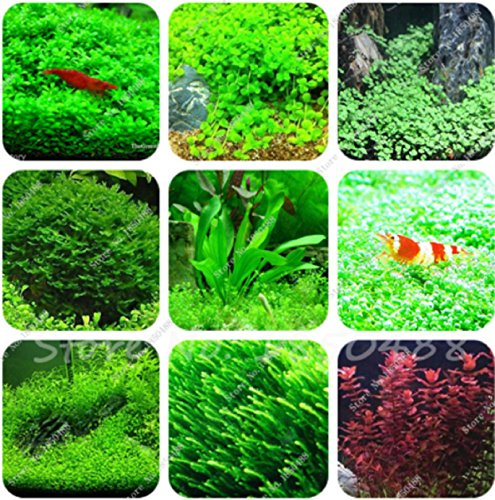 fish tanks for sale - 7