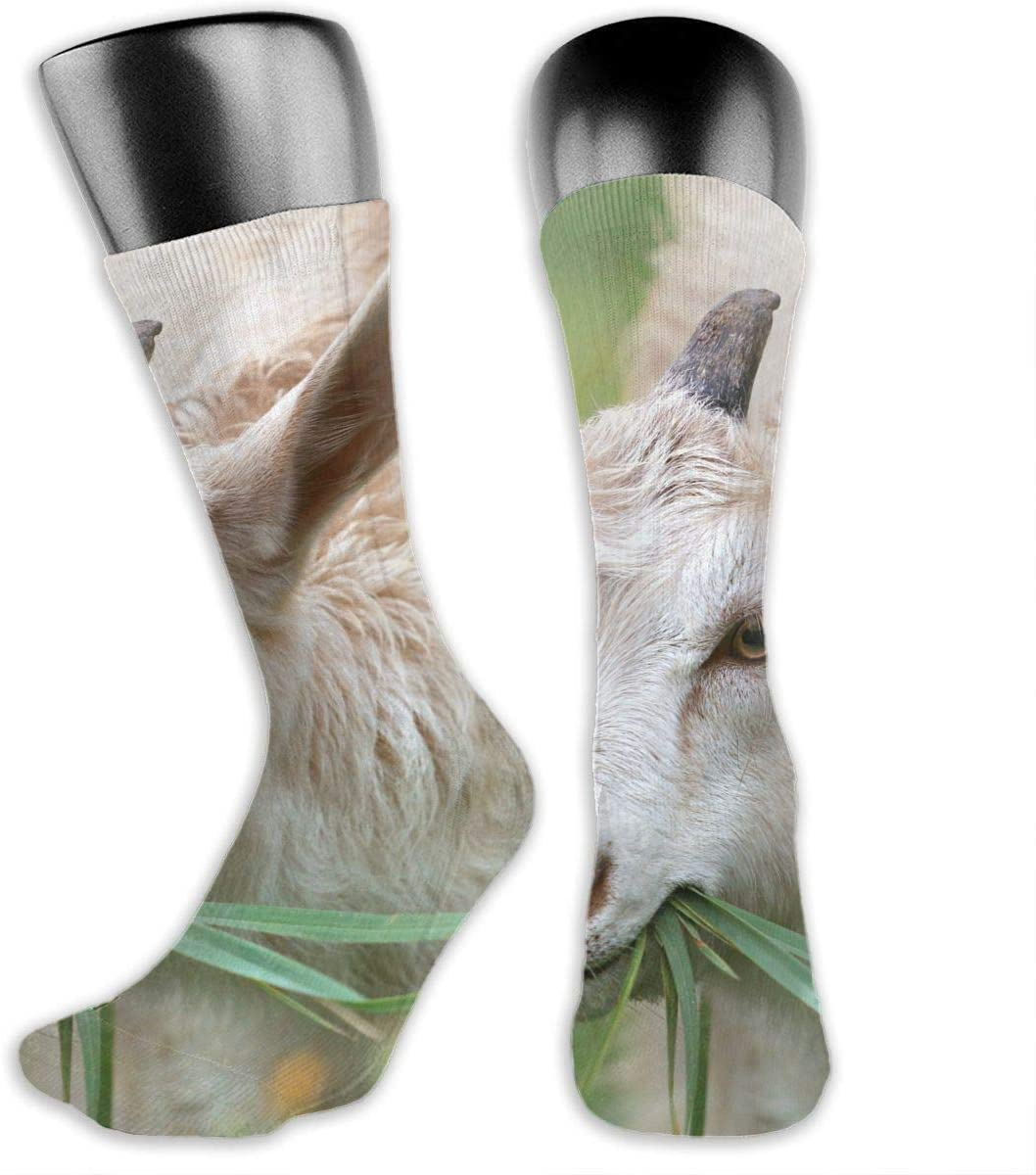 OLGCZM Goat Men Womens Thin High Ankle Casual Socks Fit Outdoor Hiking Trail