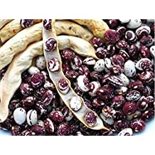 Pole Bean: Good Mother Stallard-20+ Heirloom Seeds Open Pollinated hearty flavor