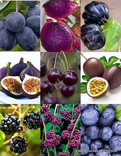 Amazon Com 15 Seeds Purple Fruits Mix Rare Organic Edible