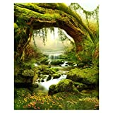 Fairy Tale Scene Backdrop - SODIAL(R)5X7FT Vinyl Backdrop Photography Prop Fairy Tale Scenic Photo Background