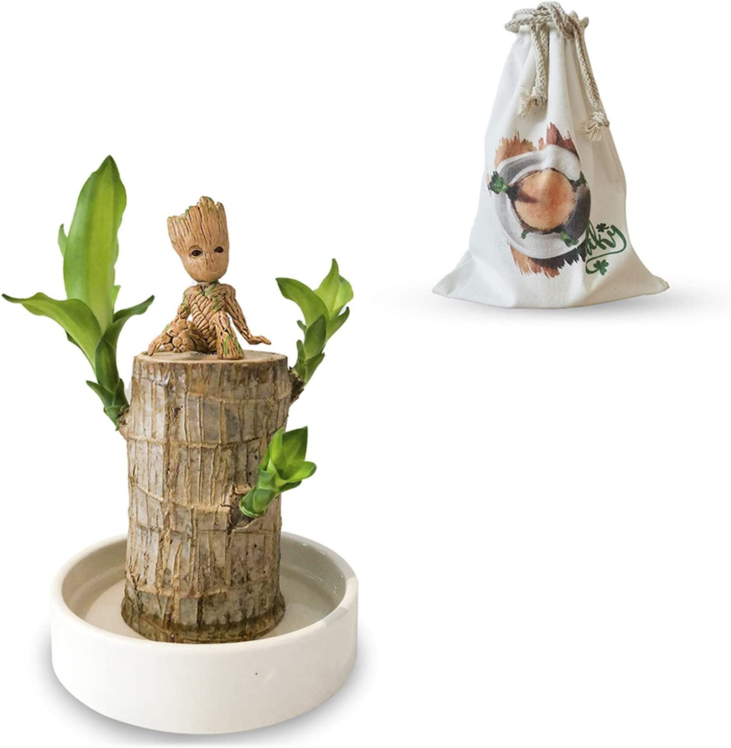 Log with Basin ,Office Desktop Plants 5-8 cm in Diameter Cafe Decoration Indoor Plant Ornaments YLKJSTYS Brazilian Wood Potted Plants,Mini Brazil Lucky Badan Wood,Clean Air Home Hotel Garden