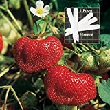 buy Organic Tribute Strawberry 300 Seeds Upc 646263362501 + 1 Free Plant Marker now, new 2018-2017 bestseller, review and Photo, best price $6.09
