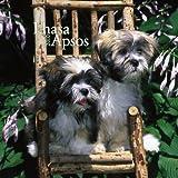 Lhasa Apsos Puppies 2010 Mini Wall