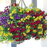 ADB Inc Heirloom Hanging Petunia Mixed Seeds