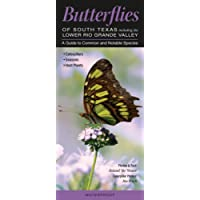 Butterflies of South Texas Including the Lower Rio Grande Valley: A Guide to Common and Notable Species