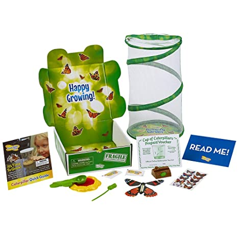 Amazon.com: Insect Lore Butterfly Garden Gift Set with Prepaid ...