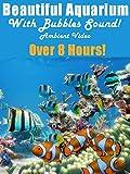 Beautiful Aquarium With Bubbles Sound - Ambient Video