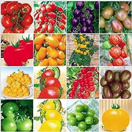 100 Tomato Bonsai Seeds Garden Fresh Vegetable Home Plants Greek Non Gmo Sweet