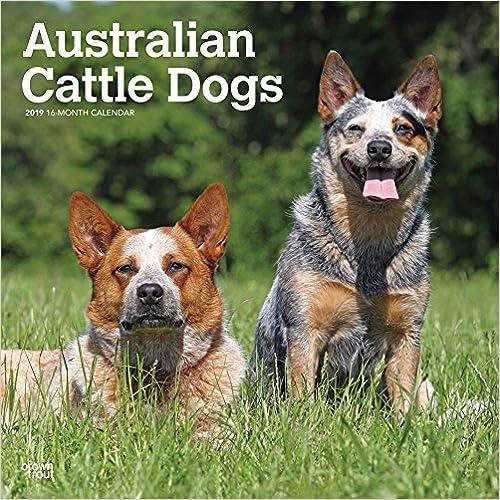 Australian Cattle Dogs 2019 Calendar