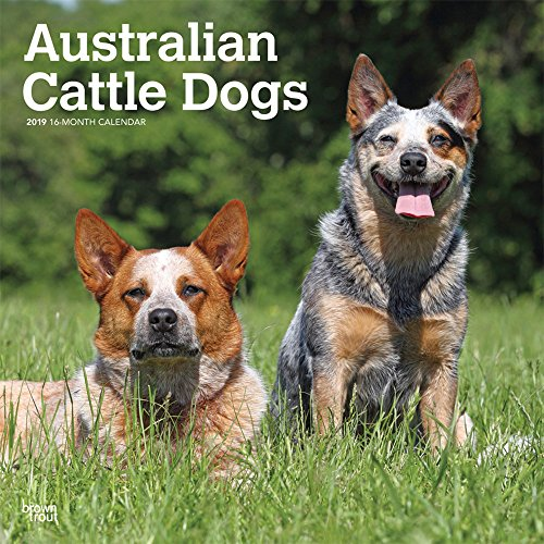 - Australian Cattle Dogs 2019 12 x 12 Inch Monthly Square Wall Calendar, Animals Dog Breeds (Multilingual Edition)