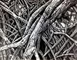 ''Mangrove VII'' Drawing by Dawn Rosendahl ~Original Pencil Drawing