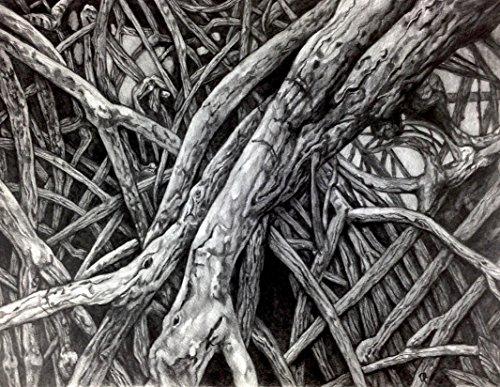 ''Mangrove VII'' Drawing by Dawn Rosendahl ~Original Pencil Drawing by Artist Eye Studios