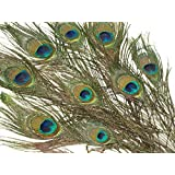Dimart Peacock Natural Feather Craft Decoration for Costumes, Hats,Mask,Home DIY Decoration