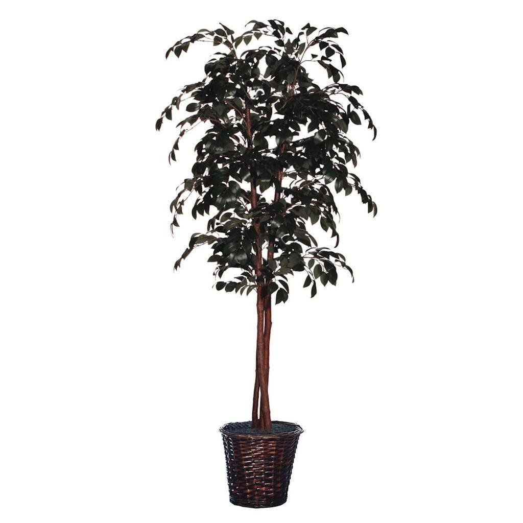 Vickerman TDX0760 Everyday Sakaki Tree, Green, 6'