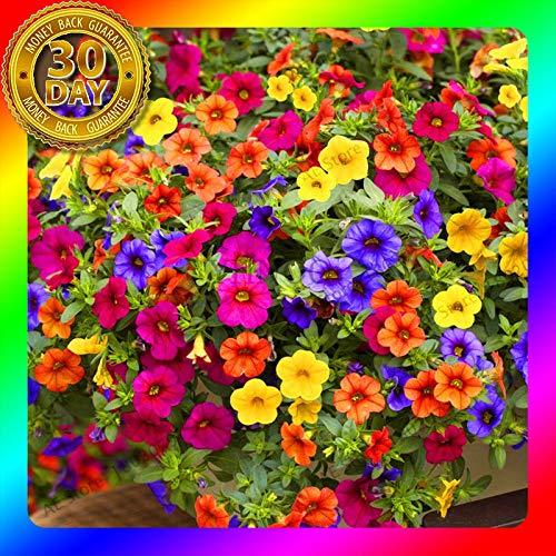 (200pcs Hanging Petunia Mixed Seeds Color Waves Beautiful Flowers for Garden Pot)