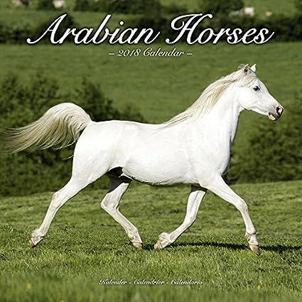 Calendario 2018 caballos árabes - caballos de Race (AV ...