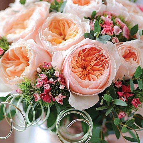 Juliet Rose Price In India, NooelecSeedsIndiaJulietRoseFlowerSeedsAmazonInGardenOutdoors, Juliet Rose Price In India