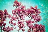 Magnolia Photography, Spring, Pink, Rustic Decor, Shabby Chic, Home Decor, Wall Art, Nursery Print, Living Room Art, Bedroom Art, Gardening Sizes Available from 5x7 to 20x30.