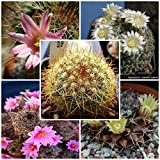 Seeds Combo 5 Species of Mammillaria (25 Seeds of M. euthele, 25 Seeds of M. Formosa, 25 Seeds M. fraileana, 25 Seeds M. freudenbergeri, 25 Seeds of M. fuscata)- Individually Packaged