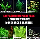 100+ stems / 6 species Live Aquarium Plants Package - Anacharis, Amazon and more! (100+ Gallon Aquariums)