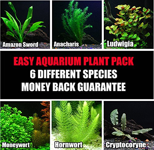 6 species easy live aquarium plants package anacharis for Easy aquatic plants