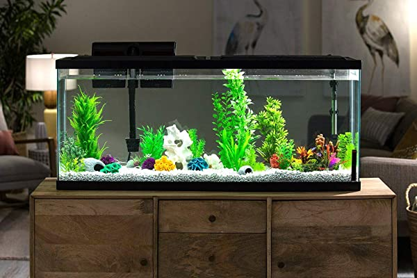 50-Gallon-Fish-Tank