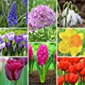 Assorted Flower Bulb Starter Garden Collection - 240 bulbs - Blooms Early to Late Spring