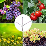 Brite Labs LED Grow Lights for Indoor Plants and