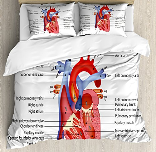 Heart Art Human (Ambesonne Educational Duvet Cover Set Queen Size, Medical Structure of The Hearts Human Body Anatomy Organ Veins Cardiology, Decorative 3 Piece Bedding Set with 2 Pillow Shams, Coral Red Blue)