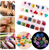 XICHEN Nail Art Accessories 12-color three-dimensional nail dry flowers 36 Starry plus 36 five flower