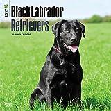 2017 Black Labrador Retrievers Dogs Wall Calendar Lab {jg} Best Holiday Gift Ideas - Great for mom, dad, sister, brother, grandparents, , grandchildren, grandma, gay, lgbtq.