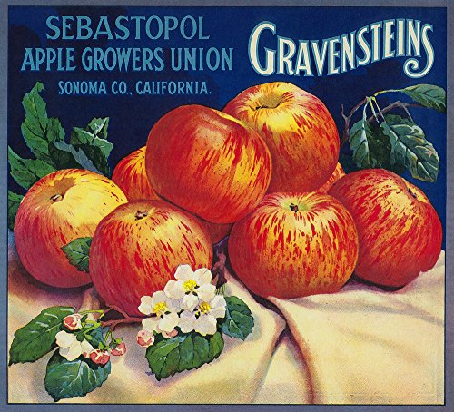 Sebastopol Gravensteins Apple - Vintage Label (9x12 Fine Art Print, Home Wall Decor Artwork Poster)