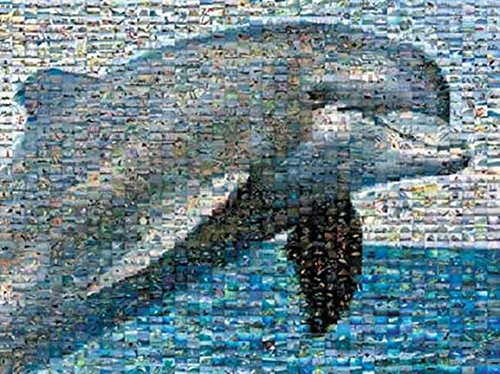 Robert Silver's Photomosaic - Dolphin