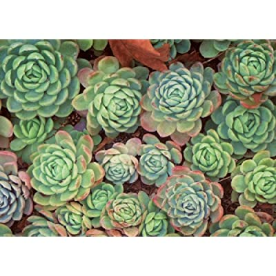 Puzzle 1000 Piece Succulent Plants Adult Puzzle DIY Kit Wooden Puzzle Modern Home Decor Unique Gift: Arts, Crafts & Sewing