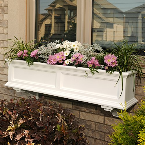 Buy flowers for planter boxes