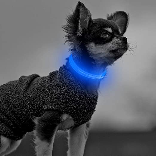 Clan-X Glowing Puppy Collar - USB Rechargeable LED Pet Collar, Light Up Dog Collars, Reflective Basic Dog Collar for Small Dogs and Cats (XS, Blue)