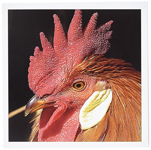 Rooster Leghorn (3dRose Leghorn Rooster by Angelandspot - Greeting Cards, 6 x 6 inches, set of 6 (gc_10910_1))
