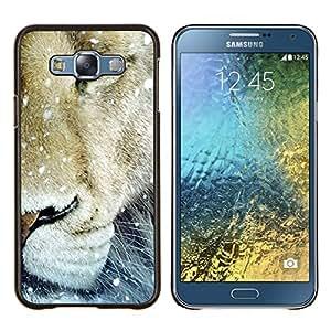 YiPhone /// Prima de resorte delgada de la cubierta del caso de Shell Armor - León de la nieve de invierno Animal Rey Naturaleza - Samsung Galaxy E7 E700