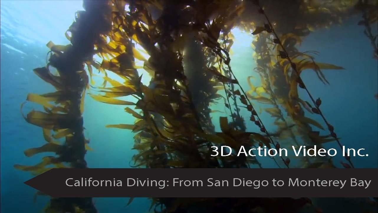 California Diving From San Diego to Monterey Bay (with Franko Maps electronic Fish ID Cards and Maps California Channel Islands Monterey Catalina Islands San Diego Los Angeles Ventura Santa Barbara Orange) pdf epub