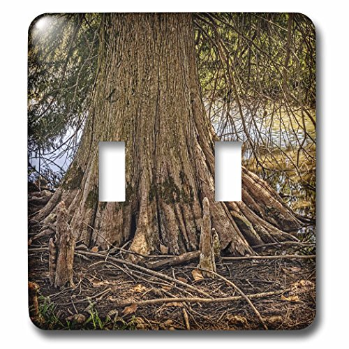 3dRose Boehm Photography Landscape - Large Cypress Tree and Roots - Light Switch Covers - double toggle switch - Cypress Outlets