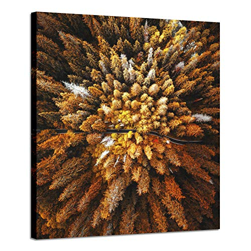Canvas Art Scenery Picture Paintings: Aerial View Printed Landscape Artwork -Nature Road in Brown Forest for Wall Decor