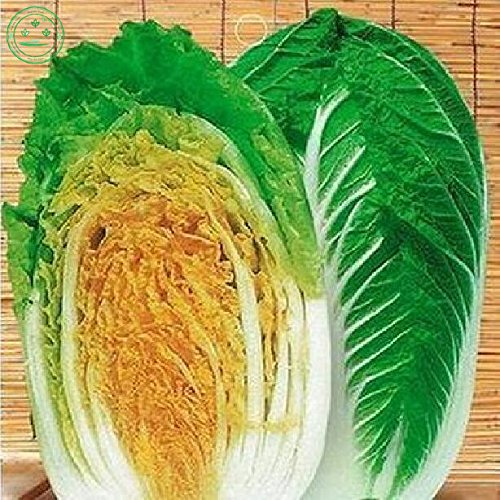 Rare yellow cabbage heart seeds of vegetables, easy to grow Gold Chinese cabbage seeds free delivery 20 pcs w14