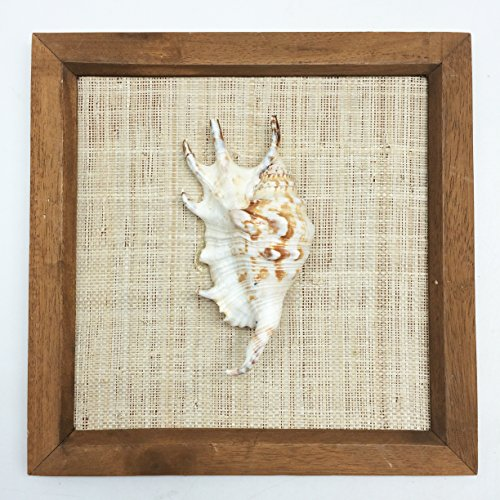 Spider Conch Shell - PEPPERLONELY 8x8 Inch Wood Framed Lambis Spider Conch Shell, Sea Shell Art Wall Décor