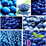200 pcs Blueberry seed Fruit seeds Potted blueberry seed